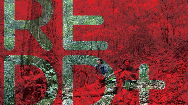 What is REDD+? A Guide for Indigenous Communities